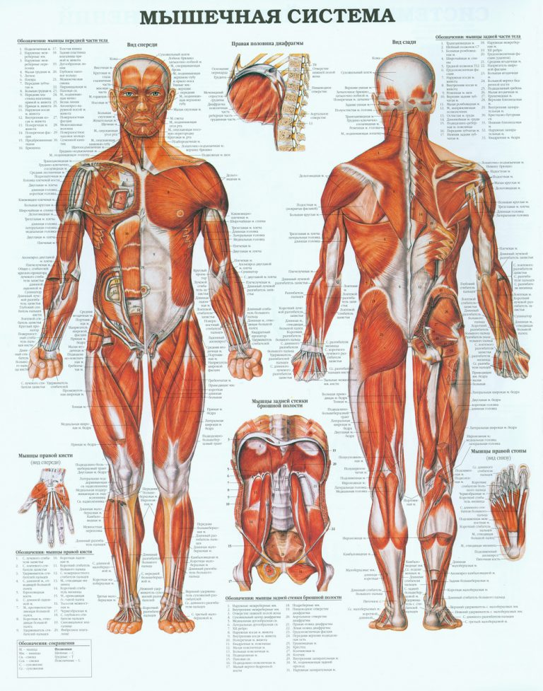 anatomy pictures Anatomy science that studies the structure of the human body, as well as the relationships between the various organs within it.